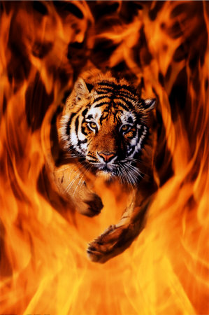 bengal-tiger-jumping-flames